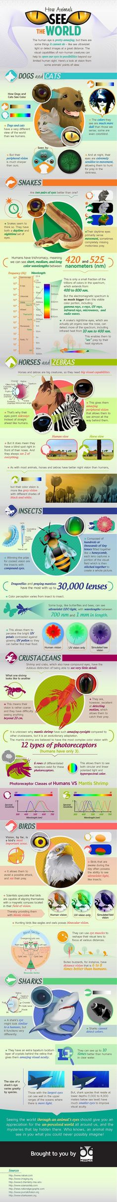 How Animals See the World [Infographic]