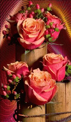 Gif Paradise Beautiful Good Night Quotes, Good Morning Beautiful Pictures, Good Morning Images Flowers, Beautiful Flowers Pictures, Beautiful Rose Flowers, Beautiful Gif, Amazing Flowers, Roses Gif, Flowers Gif