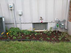 My bee garden #gardening #garden #gardens #DIY #landscaping #home #horticulture #flowers #gardenchat #roses #nature