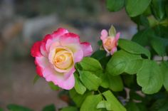 Roses are forever by Vagelis Antoniadis on 500px