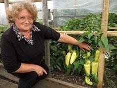 Прищипнешь рассаду-увеличишь урожай перцев