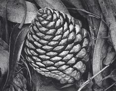 Texture of a pine cone. I really like this because its in black and white and the tone has the texture stand out really well.