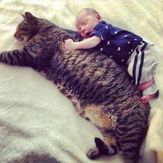 purrfect baby sitter