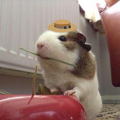 Funny pig!!!!!