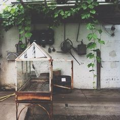 Potting Shed In Waiting. Picture Via Frolic - Potting Shed In Waiting. Picture Via Frolic - Exotic Plants, Green Plants, Farm Gardens, Outdoor Gardens, Dream Garden, Home And Garden, Outdoor Spaces, Outdoor Living, Potting Sheds