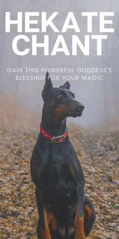 Goddess Of The Underworld, Hecate Goddess, Celtic Goddess, Celtic Mythology, Greek Goddess Of Magic, Triple Goddess, Ancient Greek Religion, Wiccan Spells, Wiccan Quotes