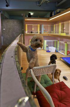 Mejores 31 imgenes de canina estetica en pinterest dog grooming gallery of petaholic hotel sms design 7 solutioingenieria Choice Image