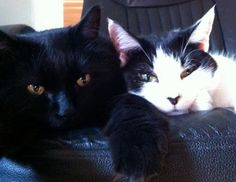 The touching story of how two of our shelter cats became best friends! #Cats #Animals #Pets #Friends #Bffs #FriendsForever