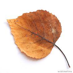 Yellow dry leaf and leaf stem.