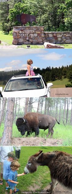 Custer State Park - Road Trip 2014 - Yellowstone or bust