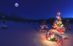 Full Moon, Snow Covered Christmas Light on a Tree.