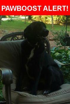 Please spread the word! Bella was last seen in Edmond, OK 73034.    Nearest Address: Near E Simmons Rd & Sticks Trail