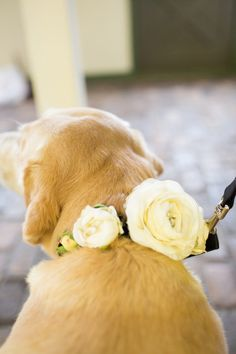 Pin pretty blossoms to the collar for a wedding-day feel! {The Bird and the Bear}