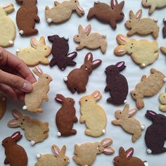 Baking Easter bunnies: recipes for shortcrust pastry, yeast dough and scram .- Osterhasen backen: Rezepte für Mürbeteig-, Hefeteig- und Rührteig-Hasen und über 70 Bilder Easter bunnies bake simple Easter bunny cookies with children - Cute Cookies, Easter Cookies, Easter Treats, Summer Cookies, Easter Food, Baby Cookies, Heart Cookies, Valentine Cookies, Birthday Cookies