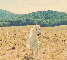 White Horse GIF Tumblr - Bing images