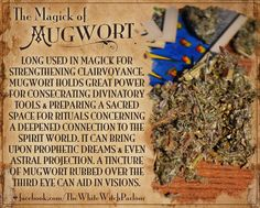 MUGWORT, Book of shadows, knowledge, correspondences, properties, magickal, wicca, spell, wisdom, tincture, potion, apothecary, witch, white witch, spellcast, earthy, clairvoyance, psychic, third eye, spiritual, herbal, botany https://www.facebook.com/TheWhiteWitchParlour