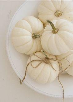 white pumpkins ~ tenderblue x