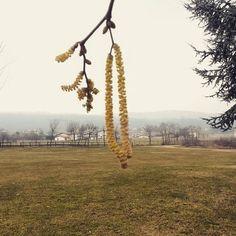 #trees #garden #grass #green #yellow #nature #instanature #instamoment #mountain #sky #cloudporn #landscape #instawinter #chips #novellaorchidea #novella #orchidea #raccontierotici #racconti #ebook #ricardo #tronconi #eroticnovel #high #long