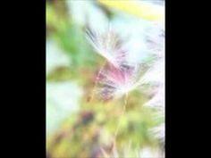 シューマン:飛翔 Op.12-2  Schumann: Aufschwung Op.12-2   天野