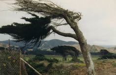 trees wind blowing | Flickr - Photo Sharing!