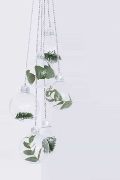 Simple, clear Christmas baubles with different winter plants Minimalist Christmas decorations at their best. Noel Christmas, Christmas Baubles, All Things Christmas, Winter Christmas, Christmas Trends, Green Christmas, Pallet Christmas, Christmas Greenery, Office Christmas