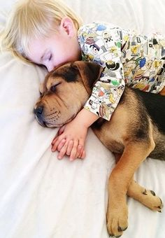 """Every dog needs a human, and every human needs a dog."" ― Angelo Dirks"