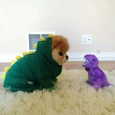 Funny pictures about Boo The Dog. Oh, and cool pics about Boo The Dog. Also, Boo The Dog photos. Cute Animals Images, Animals And Pets, Animal Pictures, Baby Animals, Funny Animals, Cute Puppies, Cute Dogs, Puppies Puppies, Awesome Dogs