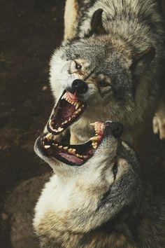 Timber wolves smile (Jim Cumming) | instagram
