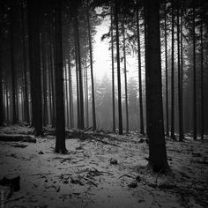 Black and white landscapes trees forest monochrome (2000x2000, white, landscapes, trees, forest, monochrome) via www.allwallpaper.in
