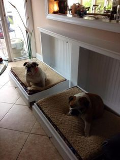 Look! Murphy Beds for the dogs...such a great idea!