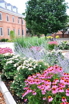 'Kim's Knee High' Purple Coneflower by University of Maryland Arboretum and Botanical Gar, via Flickr