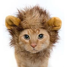 New in our shop! Lion Mane With Ears Head Cap http://www.ubellestyle.com/products/lion-mane-with-ears-head-cap?utm_campaign=crowdfire&utm_content=crowdfire&utm_medium=social&utm_source=pinterest
