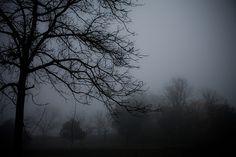 a landscape of silence Migraine Art, Misty Night, Night Shadow, Mystical Forest, Dark Love, Darkness Falls, Dark Pictures, Dark Forest, Dark Beauty