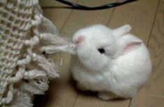Joyful rabbit