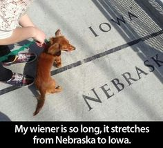 """My wiener is so long it stretches from Nebraska to Iowa!"" ~ Dog Shaming shame - Dauschound - Funny"