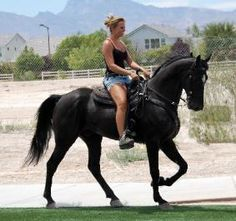 tennessee walking horses for sale, gaited trail and pleasure horses.