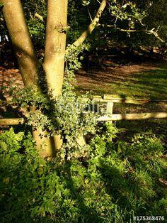 Alter Baum neben dem Holzgatter einer Viehweide am Grütebach am Barkauser Weg bei Leopoldshöhe in Ostwestfalen-Lippe