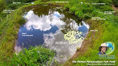 The Perfect Permaculture Fish Pond