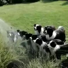 Don't forget to water your dogs - Смешные животные - tierbabys Cute Funny Animals, Cute Baby Animals, Animals And Pets, Cute Animal Videos, Funny Animal Pictures, Funny Dog Videos, Funny Dogs, Funny Puppies, Cute Dogs And Puppies