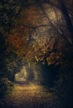 nature trees   by marta orlowska