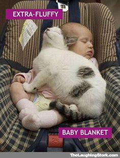 cat-sleeping-with-baby-car-seat