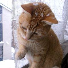 雪の中、ベランダにて。