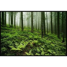 Green Forrest ❤ liked on Polyvore featuring backgrounds, green, nature, photo and pictures
