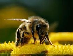 Backlit Bee by thrumyeye