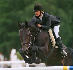 Latvian Horse or Latviiskaya (Russian), Latviiskii Upryazhnyi (Russian), Latvian Carriage, Latvian Coach, Latvian Draft