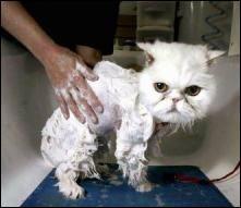 VOTE CONCOURS photo marrante de vot' animal de compagnie :)