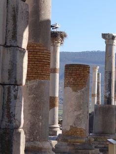 https://flic.kr/p/ENGkBG   Volubilis   Volubilis ist die größte römische Ausgrabungsstätte in Marokko nördlich von  Meknes. Viele Elemente der ehemaligen Stadt sind gut erkennbar, der Jupiter-Tempel, der Caracalla-Triumphbogen, die Basilika, die Abwasserkanäle und verschiedene Mosaiken. Unter römischer Herrschaft entstand hier eine blühende Stadt, die später zur Hauptstadt der nordwestlichen Römerprovinz Mauretania Tingitana wurde. Wikipeda