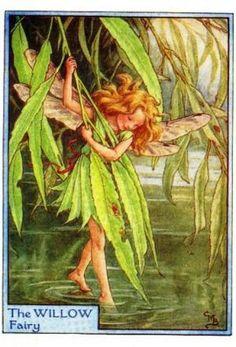 Willow Tree Flower Fairy Vintage Print, Cicely Mary Barker-printed – The Willow Tree Flower Fairy is one of Cicely Barkers Tree Flower Fairies. Cicely Mary Barker, Willow Flower, Willow Tree, Willow Leaf, Flower Tree, Weeping Willow, Art Vintage, Vintage Fairies, Vintage Paintings