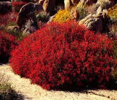 Drought Resistant Landscaping furthermore Drought Resistant Landscape moreover Property Line Landscape Ideas Front Yard likewise Landscape Ideas furthermore 224968943859464172. on front yard landscape ideas drought resistance