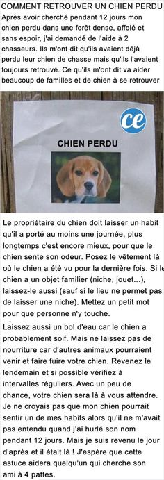 L'Astuce Stupéfiante Pour Retrouver Un Chien Perdu. Animals Tattoo, Animals And Pets, Cute Animals, Zombie Life, Post Animal, Losing A Dog, Life Savers, Diy Stuffed Animals, Pet Dogs